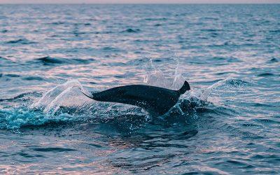 Gdzie spotkać dzikie delfiny?